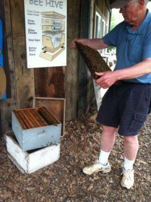 bill bundy inspecting a queen honeybee at gcf websize