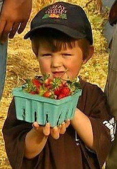 Miller's Strawberries