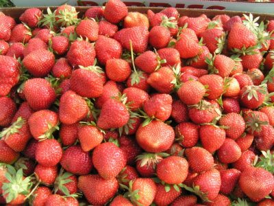 Lots of Ripe Strawberries just picked.