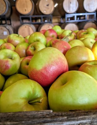 Honey Crisp apples piled high in the farm market at Great Country Farms