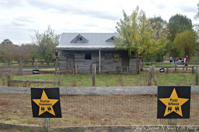 The stars of fame are displayed at the Pig Racing Barn at Great Country Farms